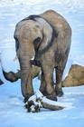 Vezměte slona na výlet, poznejte spolu hrad Lukov